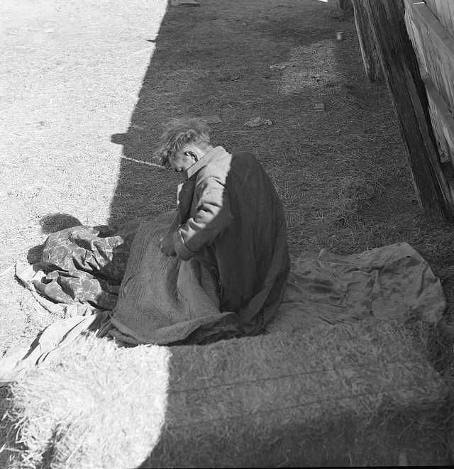 Hobo wakes up early in the morning from his bed alongside a corral. Imperial Valley, California Photo: Dorothea Lange